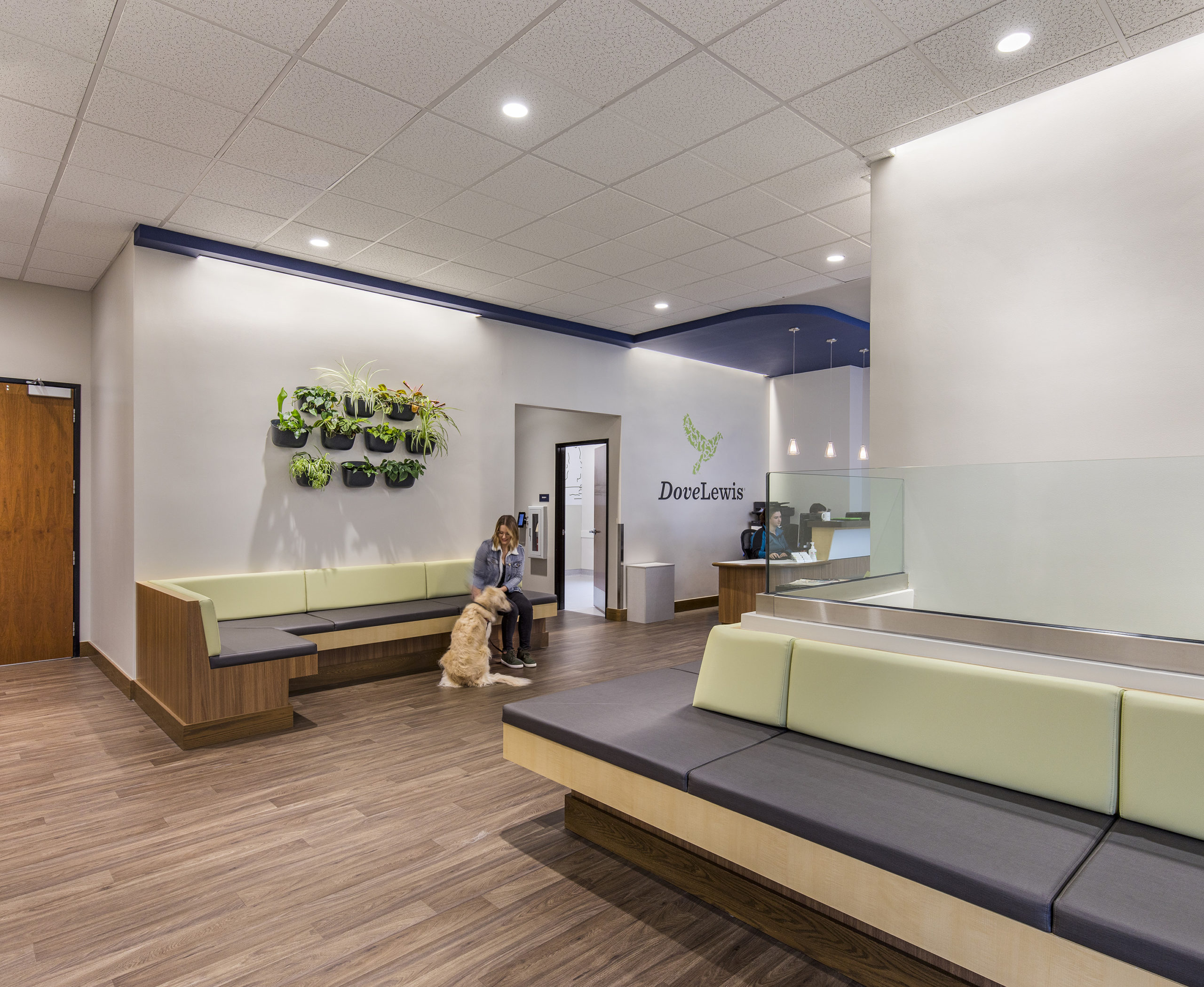 waiting area of Dove Lewis with pet and customer sitting and waiting, featuring live plant wall and LED lighting